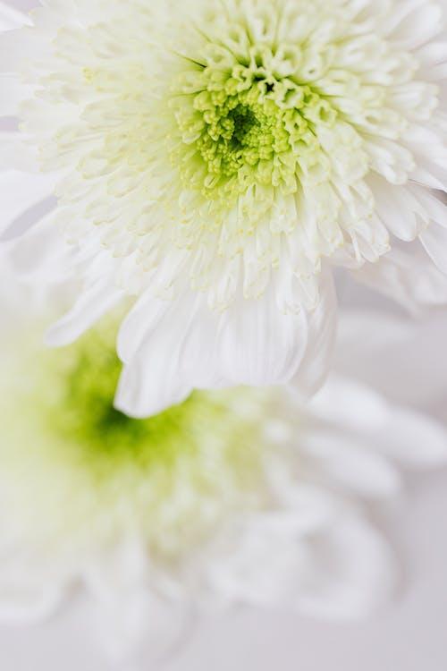 Immagine gratuita di agricoltura, ambiente, bianco, bocciolo