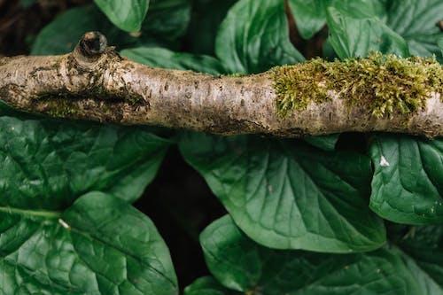 Бесплатное стоковое фото с Биология, восходить, выращивать, дерево