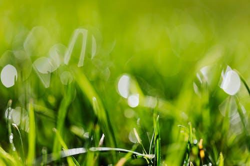 Wet green grass in field