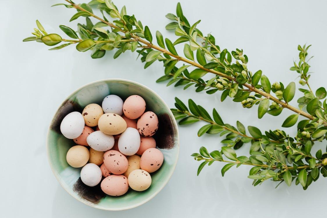Kostenloses Stock Foto zu ast, blätter, eier