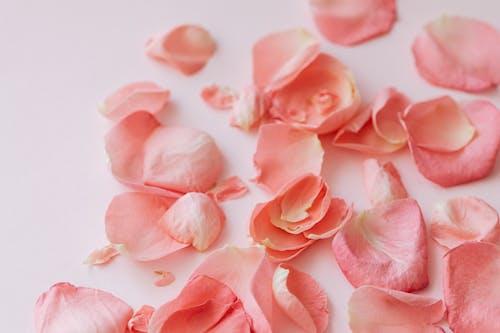 개념, 꽃, 낭만적인, 내부의 무료 스톡 사진