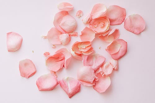Kostenloses Stock Foto zu aroma, aufsicht, blühen, blume