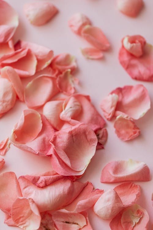 Lots of pink roses petals on pink surface