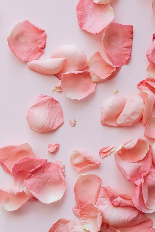 Set of soft pink petals on pink surface