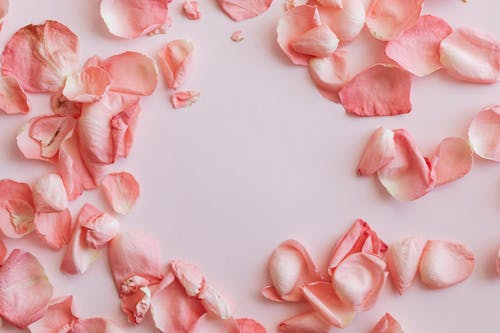 Composition of pink petals on pink surface