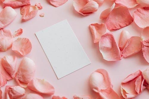 คลังภาพถ่ายฟรี ของ กระจัดกระจาย, กระดาษ, กลีบดอกไม้, การจัดเรียง