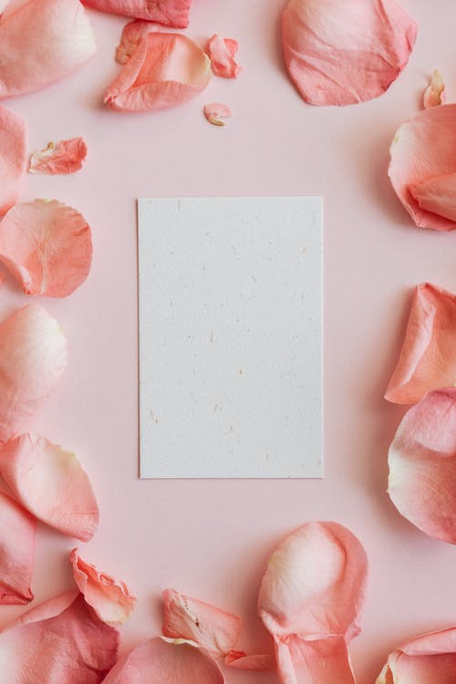 Empty card among pink rose petals