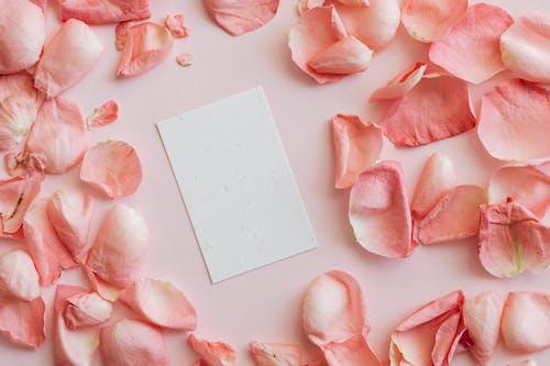 Paper card and pink petals