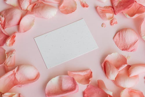 From above of white paper gift card placed among pink rose petals on pastel pink surface
