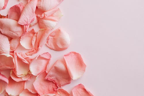 Bunch of pink petals of roses