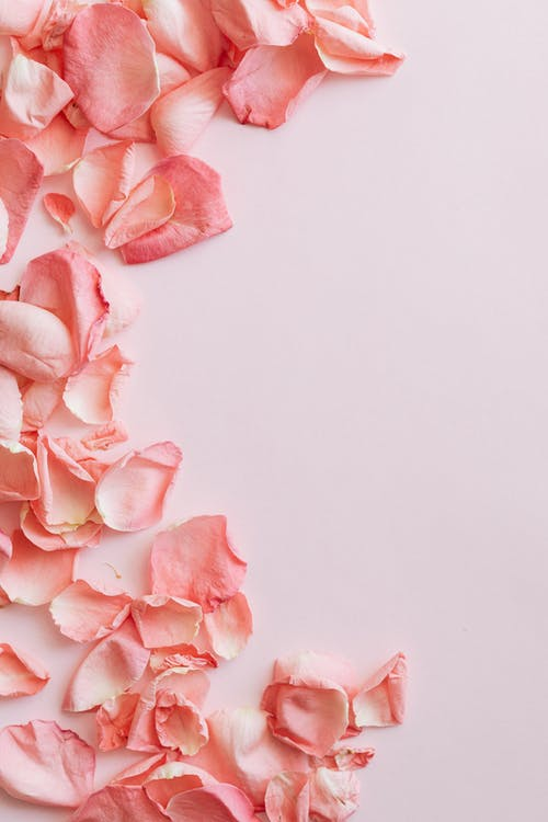 Bunch of chaotic petals of pink roses