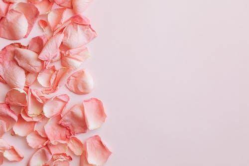 Set of pink rose petals on pink background