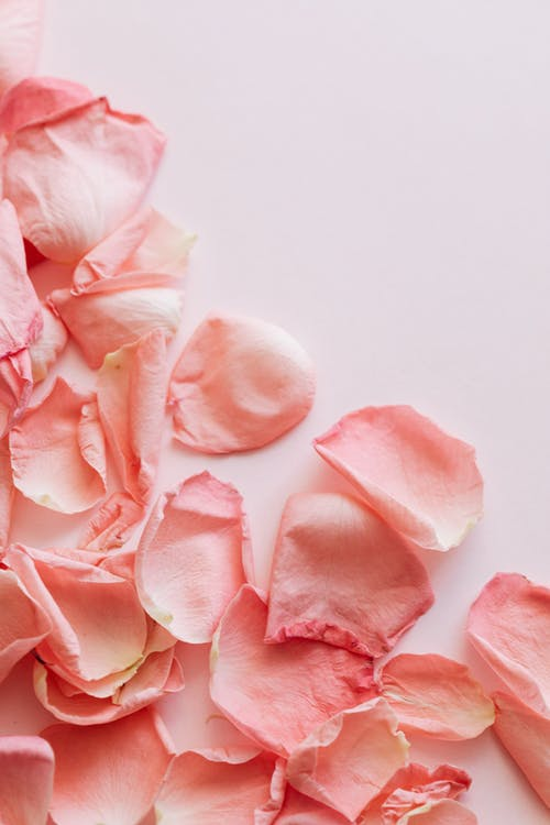 Bunch of Pink Rose Petals On Light Surface