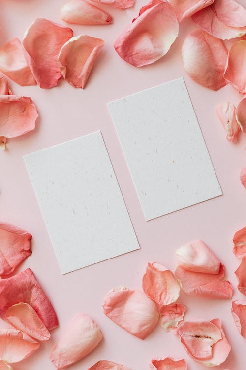 Frame of pink rose petals and mockup papers