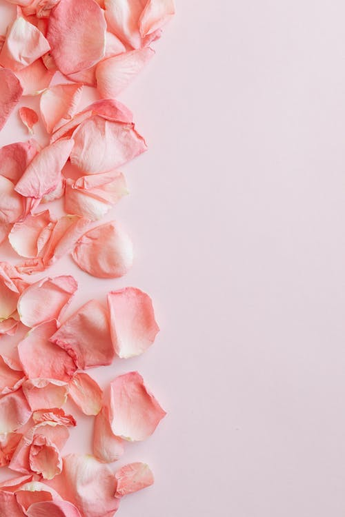 Bunch of delicate pink rose petals on pink surface