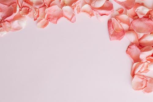Frame made of pink rose petals on pink background