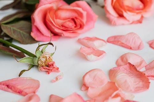 Fotos de stock gratuitas de alrededor, amor, aroma, Boda