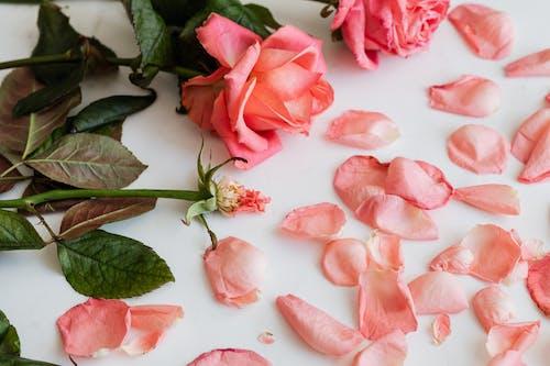 Photos gratuites de amour, amoureux, anniversaire, arôme