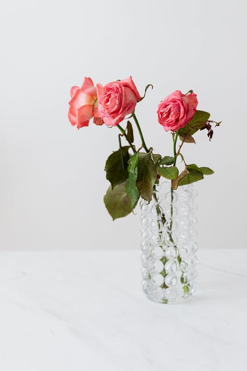 Pink rose bouquet with blossoming buds with gentle petals and thin stalks with large pointed leaves on glass bubbly vase on white background