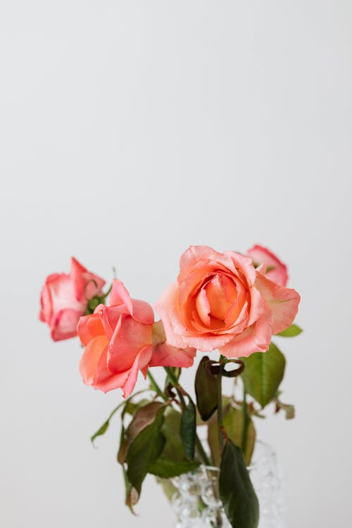 Kostenloses Stock Foto zu anordnung, aroma, blatt, blühen