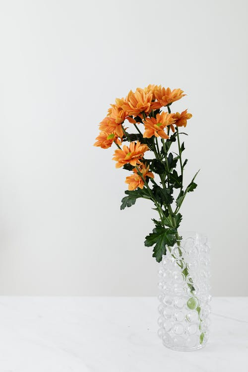 Chrysanthemum flower in glass vase on white table