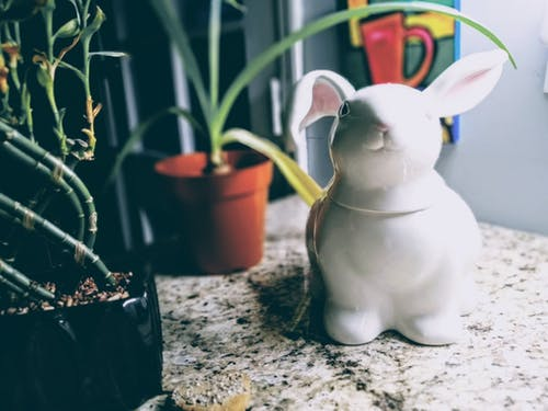 Foto d'estoc gratuïta de a l'aire lliure, bunnie, cassola, ceràmica
