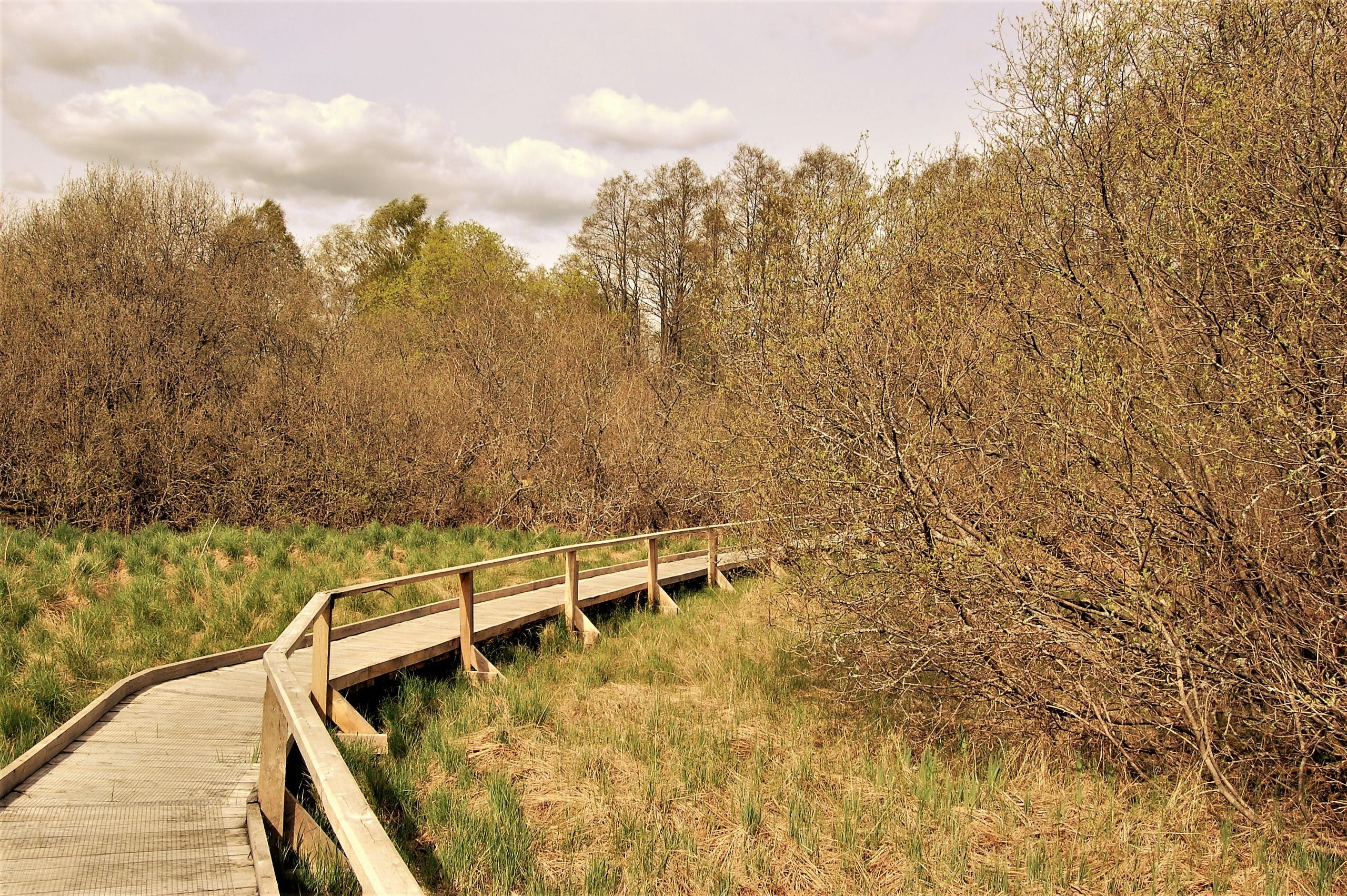 Brown Wooden Bridge Leading Behind Trees