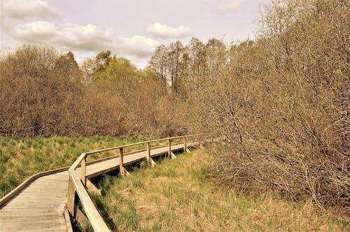 Photos gratuites de arbres, aventure, campagne, dehors