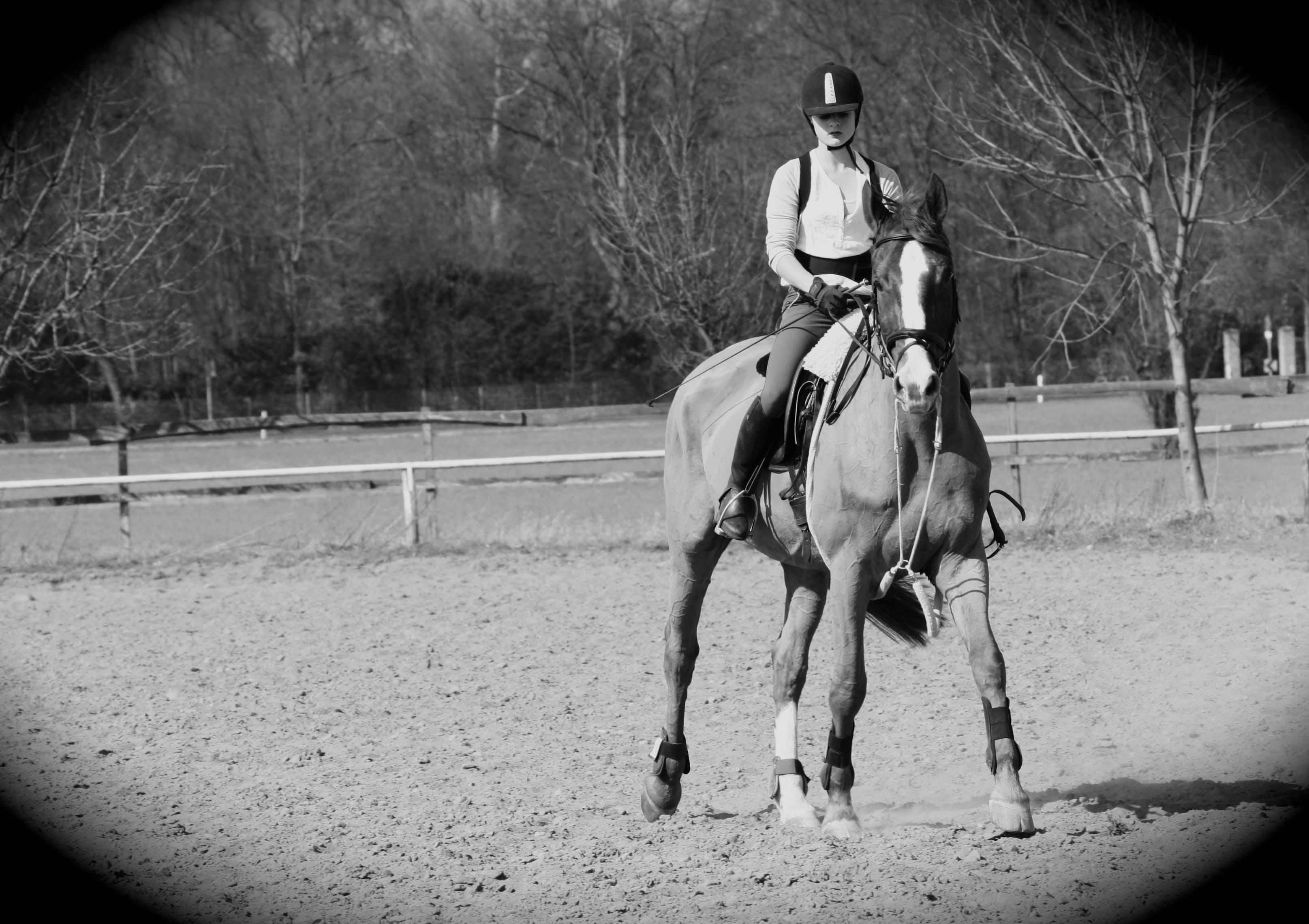 Free stock photo of black&white, dark, horse, horseman