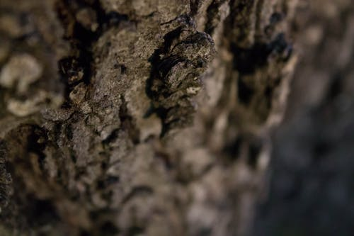 Kostenloses Stock Foto zu baumrinde, tiefenschärfe, wasser eiche