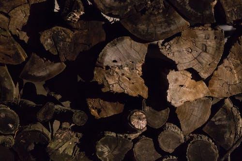 Imagine de stoc gratuită din buștean, lemn, trunchi de copac