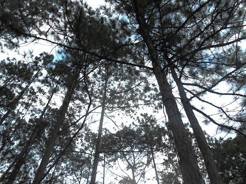 Free stock photo of beautiful, landscape, trees