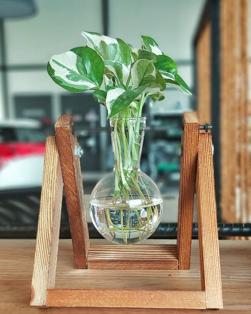Creative glass wave with green plant