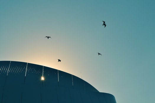 Free stock photo of light, sky, flying, silhouette