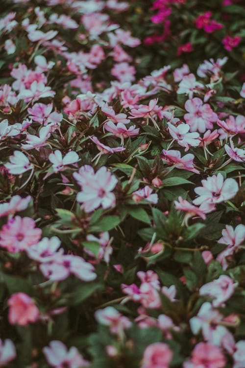 From above full frame flowers of tender pink and white colors with gentle green leaves