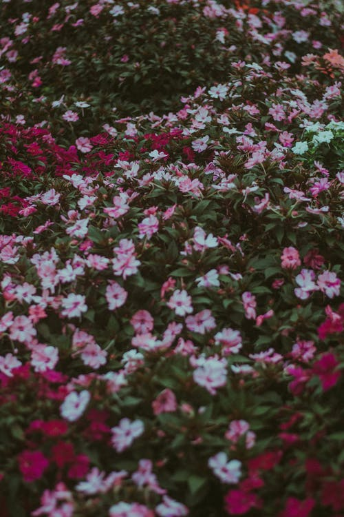 Blooming flowers covering ground in garden