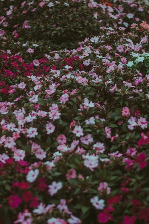 Základová fotografie zdarma na téma barva, dekorace, flóra, hřiště