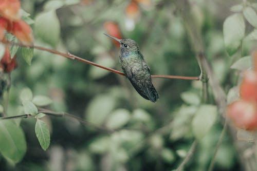 Tender green hummingbird on twig