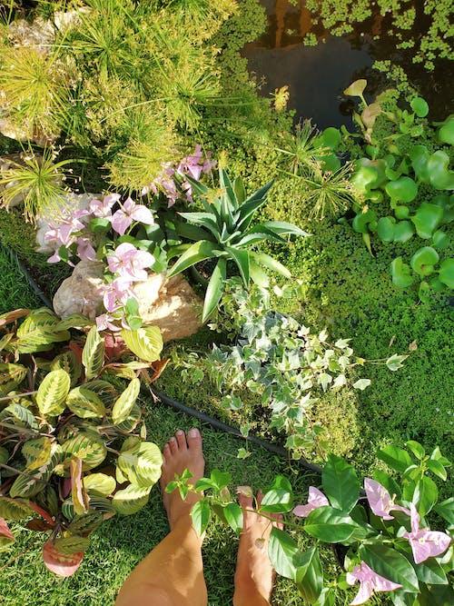 Free stock photo of botanic garden, garden plants, green grass