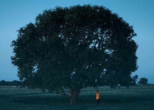 Person in Yellow Jacket Standing Near Green Tree