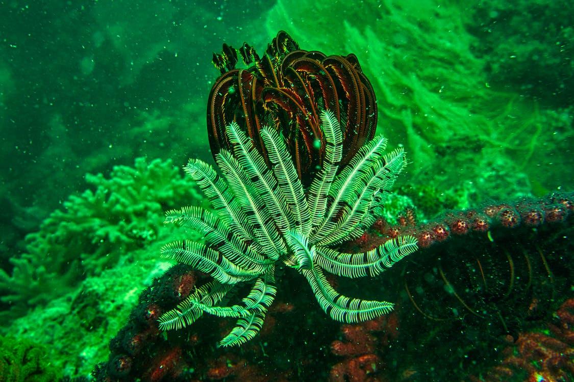Underwater Plants