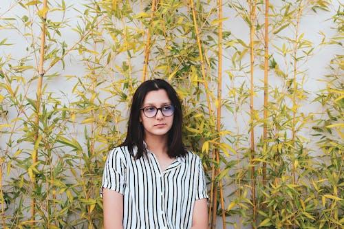 alan, Bahçe, bambu içeren Ücretsiz stok fotoğraf