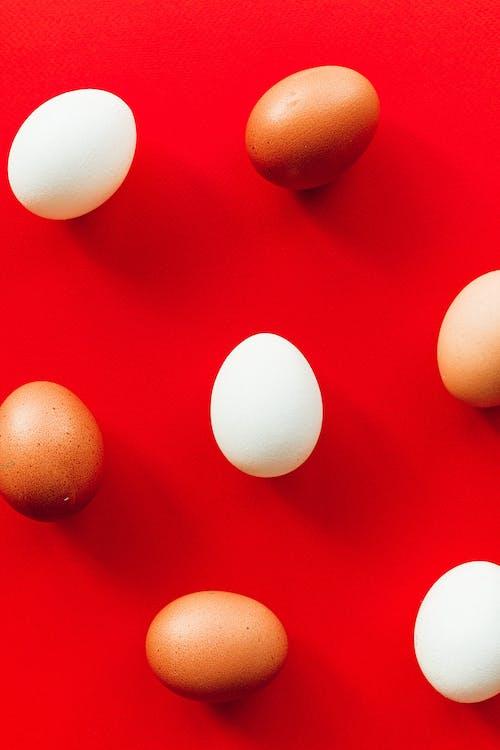 Foto profissional grátis de alimento, espaço do texto, fundo vermelho, mínimo