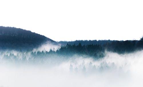 Ingyenes stockfotó anyatermészet, ég, erdő témában
