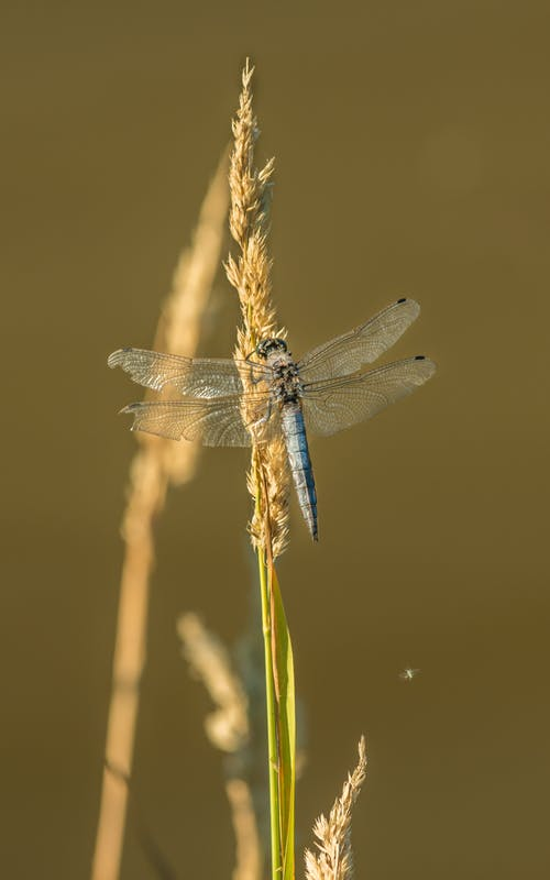 Close-Up Photo of Blue Dragonfly