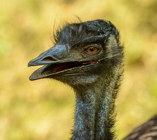 Black Emu Head in Close Up Photography