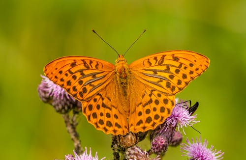 Close-Up Photo of Orange Butterfly
