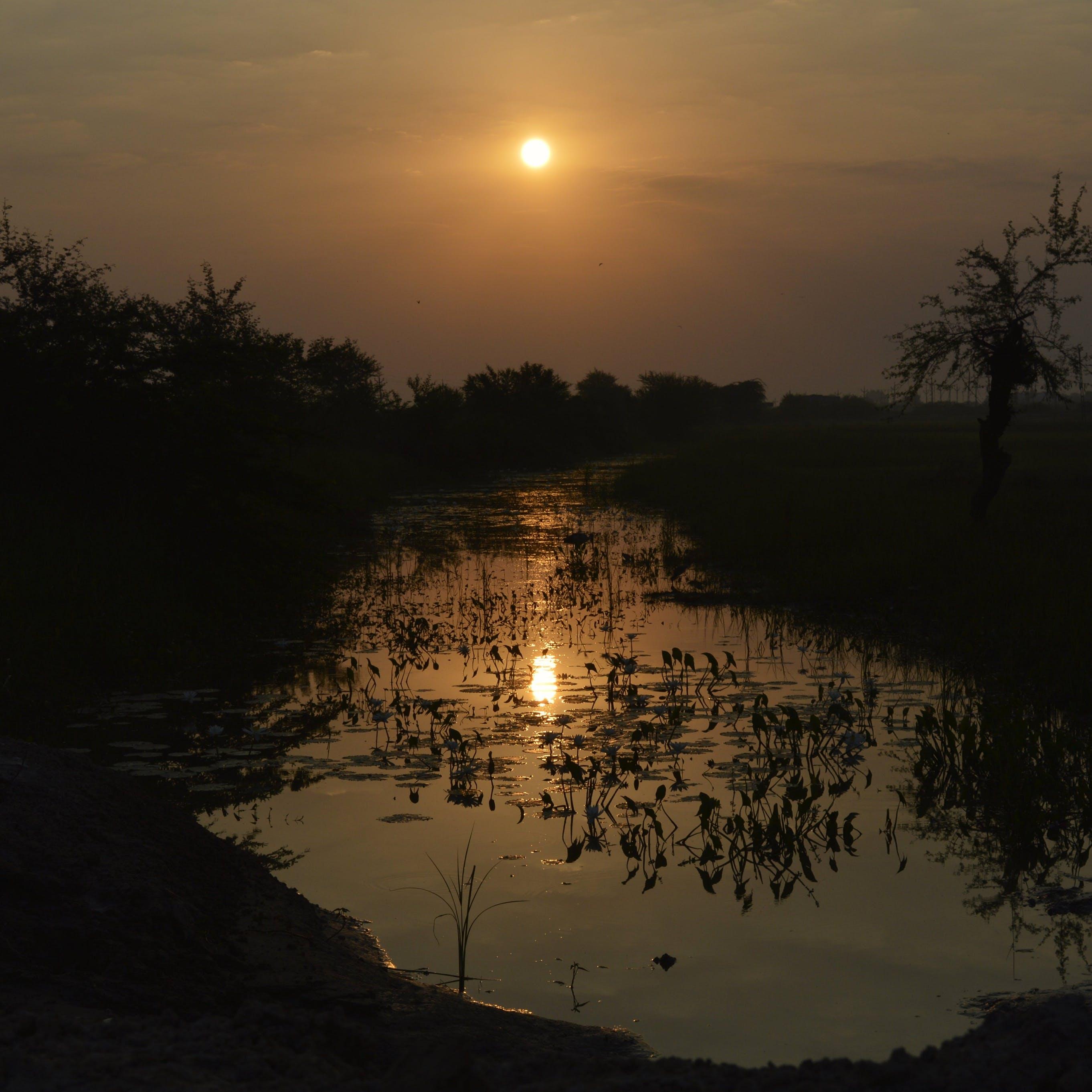 Free stock photo of morning sun, nature, sunset