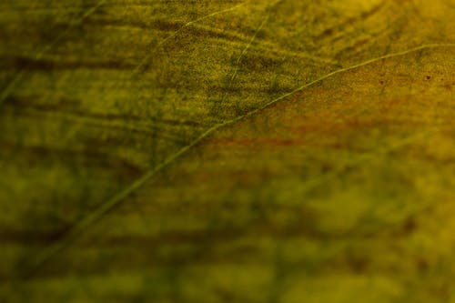Close-up View Of Veins Of A Leaf