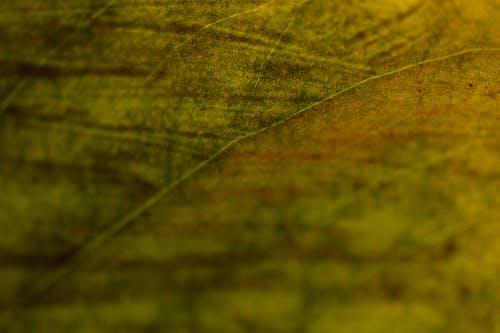 テクスチャ, パターン, ビンテージの無料の写真素材